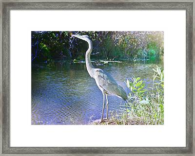 Dawn Breaking Framed Print