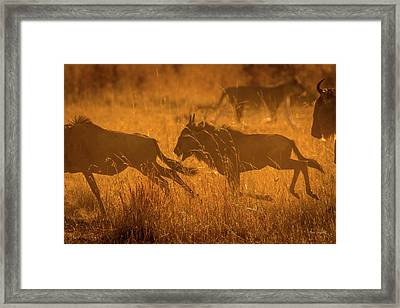 Dawn Chase Framed Print