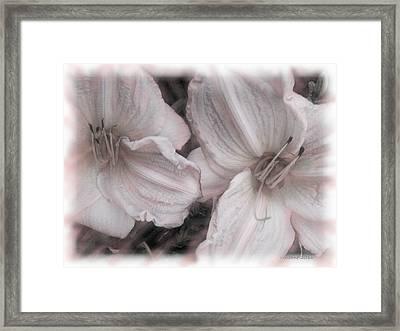 Dawns Fading Flowers Framed Print