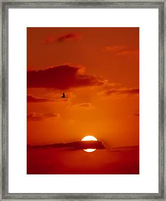 Dawn Flight Framed Print by DigiArt Diaries by Vicky B Fuller