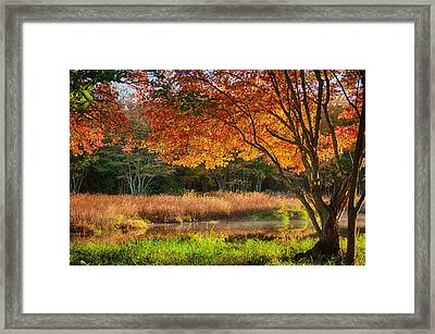 Dawn Lighting Rhode Island Fall Colors Framed Print