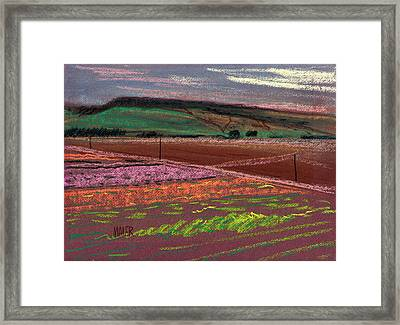 Dawn Over Lompoc Flower Fields Framed Print by Donald Maier