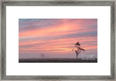 Dawn Survivor New Forest Framed Print