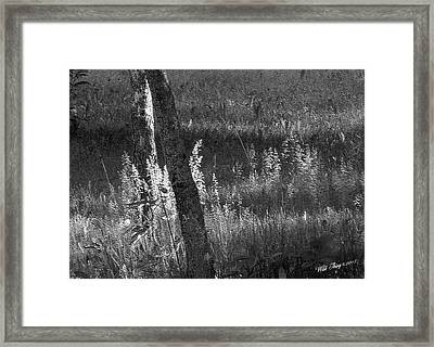 Dawn's Early Light Framed Print by Wild Thing