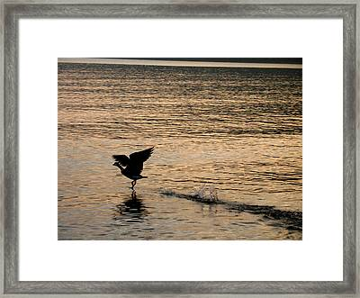 Dawn's First Flight Framed Print by Cathy Weaver