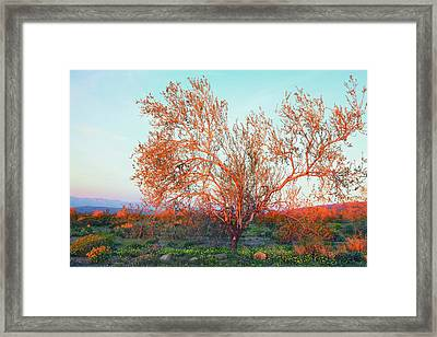 Framed Print featuring the photograph Dawn's First Light At Joshua Tree National Park by Ram Vasudev