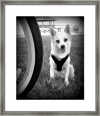 Day At The Park Framed Print