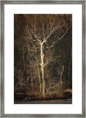 Day Break Tree Framed Print