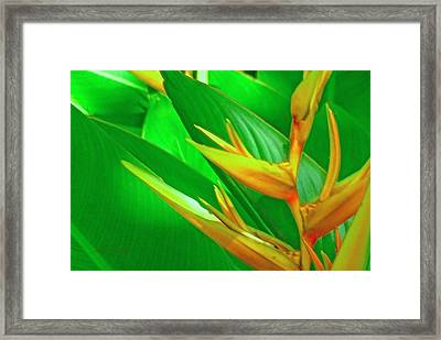 Day Dream Framed Print by James Temple