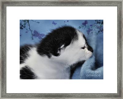 Framed Print featuring the photograph Day Dreaming by Elaine Manley