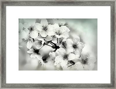 Framed Print featuring the photograph Day Dreams by Darlene Kwiatkowski