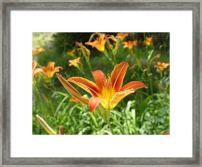Day Lillies - Standing Tall Framed Print by Murtaza Humayun Saeed