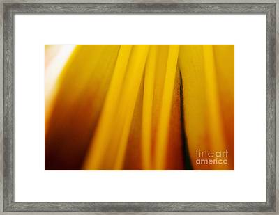 Day Lily Abstract Framed Print