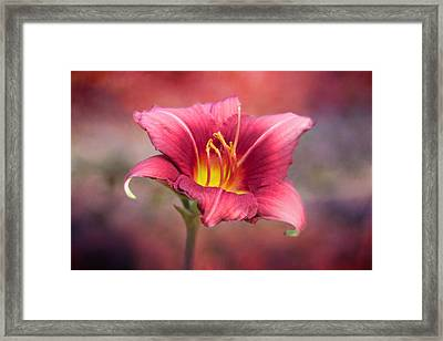 Day Lily Deep Framed Print