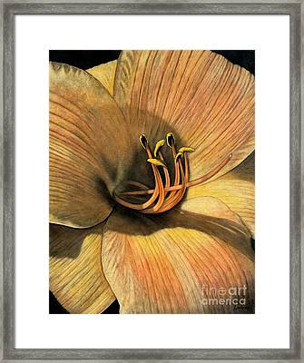 Day Lily Framed Print by Lawrence Supino