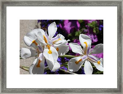 Day Lily Framed Print by M Diane Bonaparte