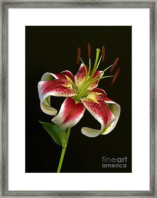 Day Lily Majesty Framed Print