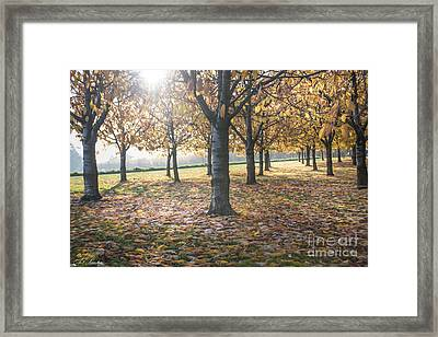 Day Of Colours Framed Print by Bruno Santoro