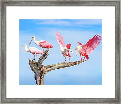 Day Of The Spoonbill  Framed Print by Mark Andrew Thomas
