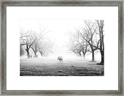 Daybreak Framed Print by Scott Pellegrin