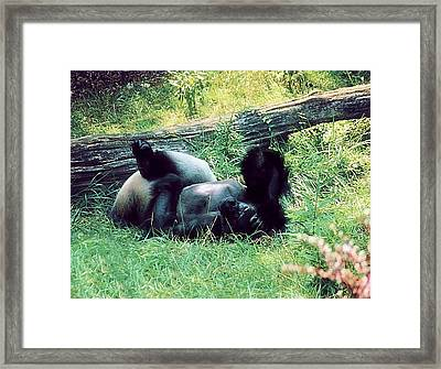 Daydream Believer Framed Print by Jan Amiss Photography
