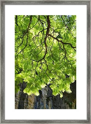 Daydream Framed Print by Skip Hunt