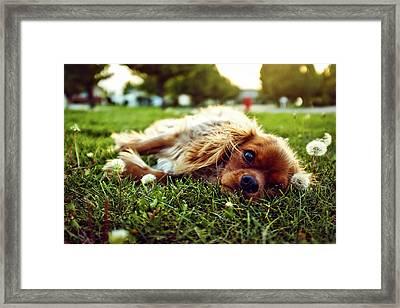 Daydreamer Framed Print by Andrew Branch