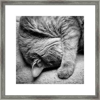 Daydreamer  Framed Print by Patrick M Lynch