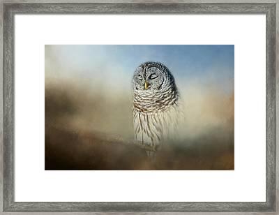 Daydreaming Framed Print by Jai Johnson