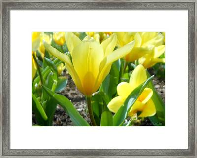 Daydreaming Of Yellow Tulips Framed Print
