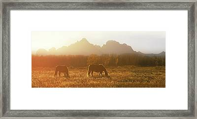 Daydreams Haze  Framed Print
