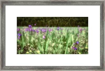 Daydreams In A Meadow Framed Print