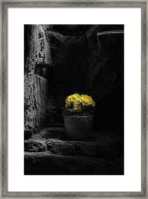 Daylight Delight Framed Print by Tom Mc Nemar