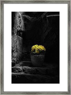 Daylight Delight Framed Print