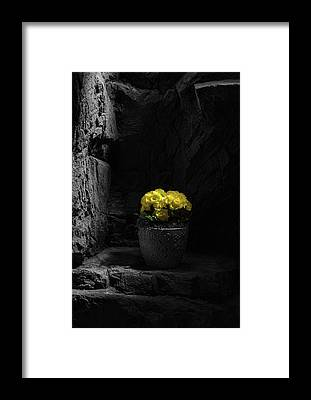 Flowerpots Framed Prints