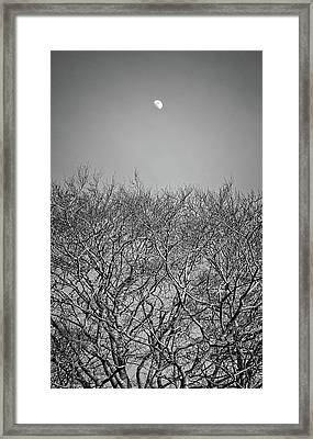 Daylight Moon Gazing Framed Print