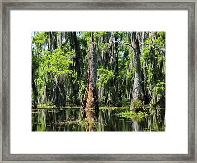 Daylight Swampmares Framed Print