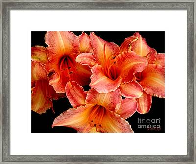 Daylilies 1 Framed Print by Rose Santuci-Sofranko