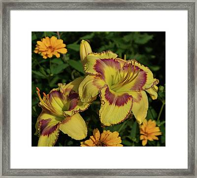 Daylilies And Zinnia Framed Print