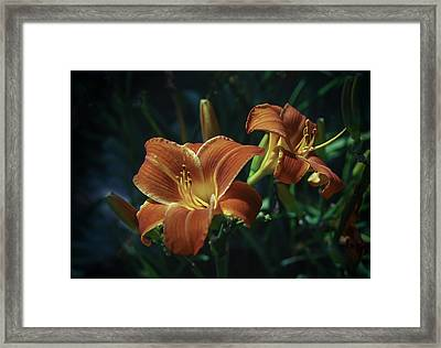 Daylilies Framed Print by Phyllis Taylor