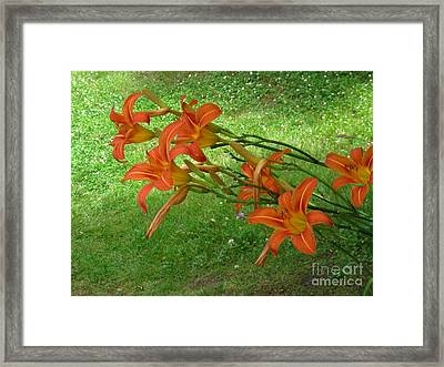 Daylilies Framed Print by Sybil Staples
