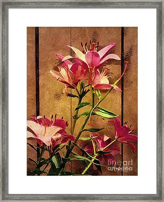 Dayliliys In  Guilford , Conn Framed Print