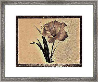 Daylily Of Old Framed Print by Marsha Heiken