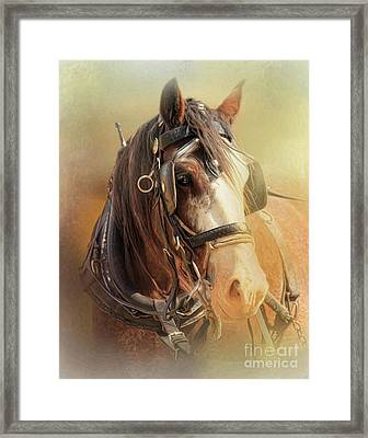 Days In The Sun Framed Print