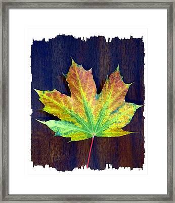 Days Of Autumn 2 Framed Print