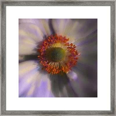 Dazie Eye Framed Print