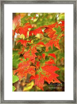 Framed Print featuring the painting Dazzling Autumn Leaves In The Blue Ridge Ap by Dan Carmichael