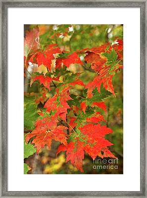 Framed Print featuring the photograph Dazzling Autumn Leaves In The Blue Ridge by Dan Carmichael
