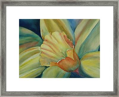 Dazzling Daffodil Framed Print