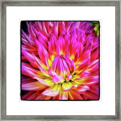 Framed Print featuring the photograph Dazzling Dahlia. It Comes In So Many by Mr Photojimsf